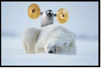 Les bears vont se réveiller