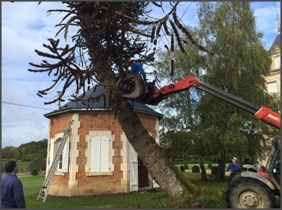 Des arbres malades sont abattus chez Bill, dans le Poitou