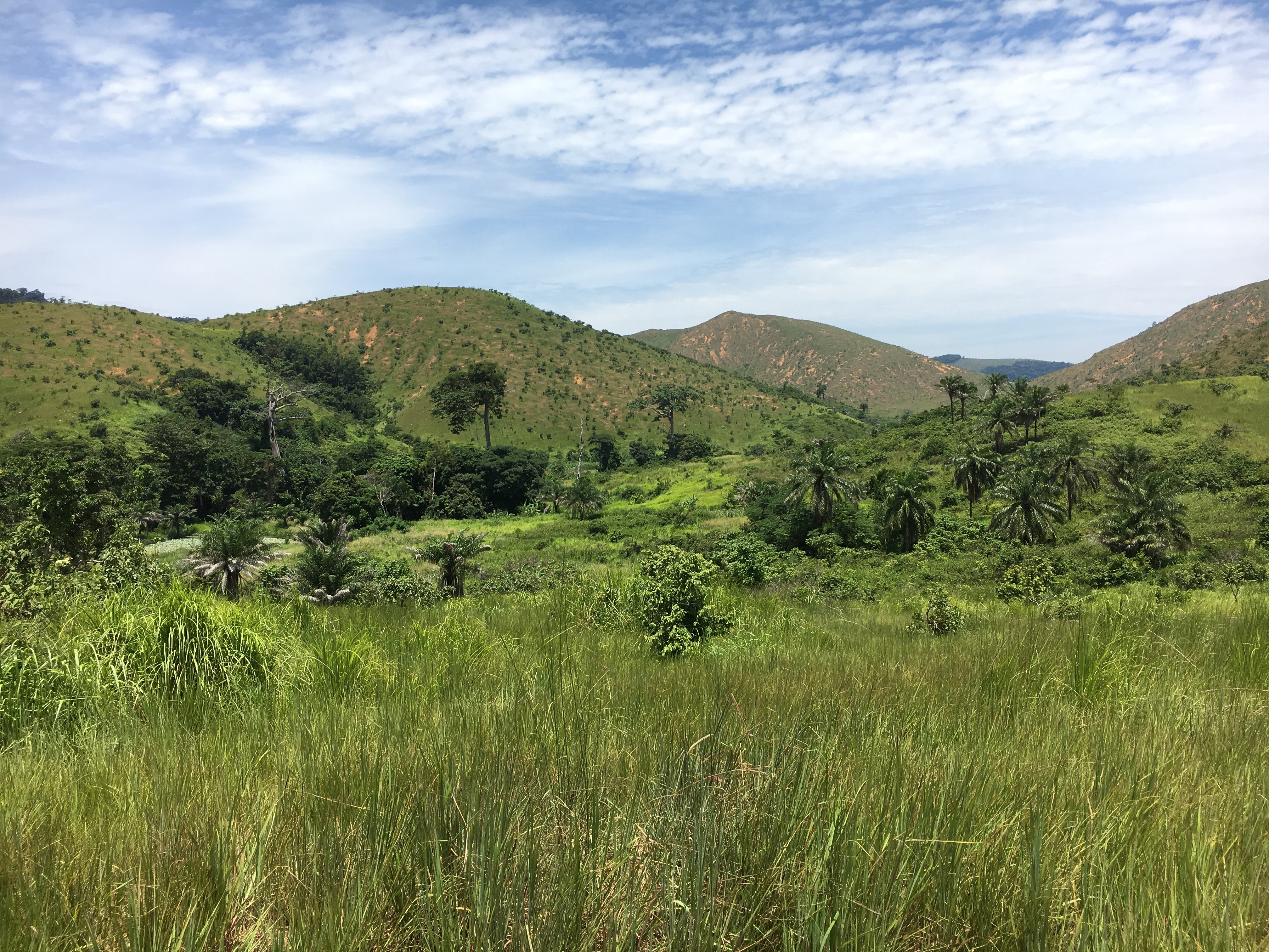 Forêt equatoriale